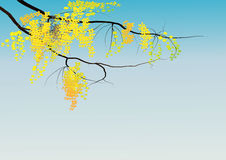 Golden shower tree on sky background ,Vector illustration Royalty Free Stock Photos