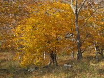 Golden and silver colors of autumn. stock images