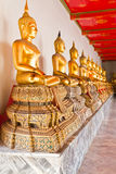 Golden sitting Buddha statue in row Stock Image