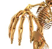 Golden Skeleton. A golden skeleton with Blood veins Royalty Free Stock Image