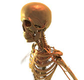 Golden skeleton. Skeleton in Golden Metall. 3D Graphic Royalty Free Stock Image