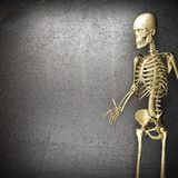 Golden skeleton Royalty Free Stock Images