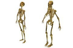 Golden skeletons. A view of golden male and female skeletons and isolated on white Stock Photos