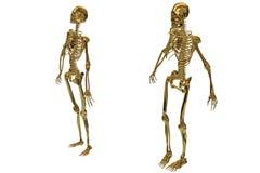 Golden skeletons Stock Photos