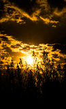 Golden sky and clouds. Silhouette of herbal plants on the background of yellow sky Royalty Free Stock Photo