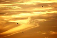 Golden sky Royalty Free Stock Photos