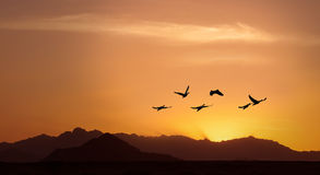 Golden sky on sunset or sunrise with flying birds panoramic view Royalty Free Stock Images