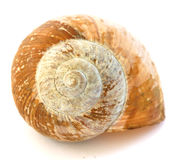 Golden snail spiral shell Royalty Free Stock Photo
