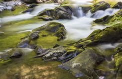 Golden Sol Duc River Stock Photography