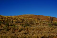 Golden Spinifex Hills Royalty Free Stock Photo