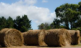 Golden srtaw rolls in the field stock image