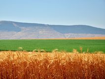 Colours of Israel stock images