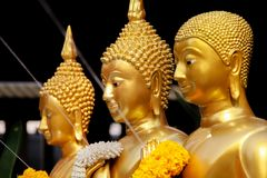 Golden Standing Buddha Statues in a Row. Stock Images