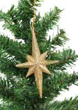 Golden star on a christmas branch Royalty Free Stock Photography
