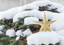 Golden star christmas decoration on pine tree. Stock Image