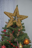 Golden star on the top of a tree Stock Image