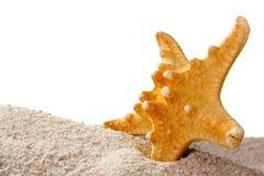 Golden Starfish Stock Image