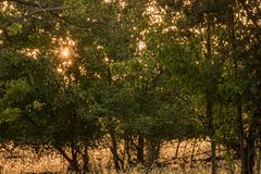 Golden stars of early morning autumn sunlight seen through leave royalty free stock images