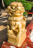 Golden statue tiger of china Stock Image