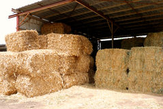 Golden straw. Bales of straw stacked under a rusted shed Royalty Free Stock Images