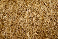 Golden straw background Royalty Free Stock Images