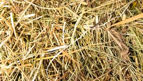 Golden  straw background vintage style for design royalty free stock image