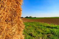 Golden straw bale on the field in front of blue sky.  Royalty Free Stock Image