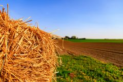 Golden straw bale on the field in front of blue sky.  Royalty Free Stock Photography