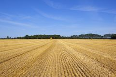 Golden straw bales with woodland Stock Photo