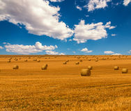 Golden straw field with hay bales and a beautiful blue cloudy sky. Harvest meadow in golden yellow colors. Stock Photo