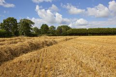 Golden straw field and woodland Stock Photos