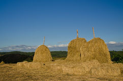 Golden straw stack on a hill of thailand. Golden straw stack taken from thailand Royalty Free Stock Image