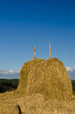 Golden straw stack on a hill of thailand Stock Photography