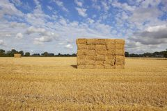 Golden straw stack Royalty Free Stock Photos