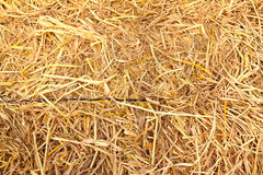 Golden straw texture background Stock Photo