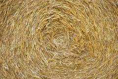 Golden straw texture background. Close up stock photos