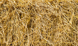 Golden straw texture background Stock Photography