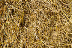 Golden straw texture background Royalty Free Stock Photos