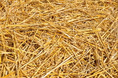 Golden straw texture Royalty Free Stock Images