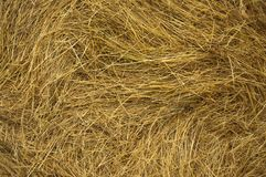 Stack of hay texture closeup. Golden straw texture ruminants animal food background. Stack of dried hay. Closeup Stock Images