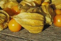 Golden Strawberry (Physalis) Stock Image