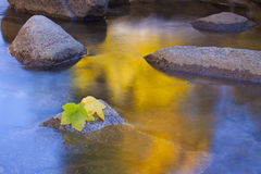 Golden Stream Leaves Stock Images