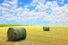 Golden stubble field and hay bales. Stock Photography