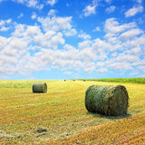 Golden stubble field and hay bales against cloudy sky. Royalty Free Stock Image
