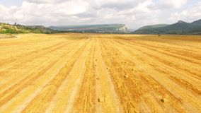 Golden Stubble Field At Picturesque Terrain stock video footage