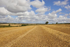Golden stubble field Royalty Free Stock Photos