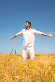 Golden summer Stock Photos