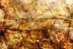 Golden Summer Abstract Background, Sunlight and Bokeh Stock Image