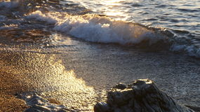Golden Summer Wave Stock Photography