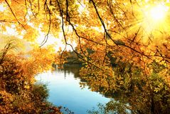 The golden sun of autumn Stock Photography